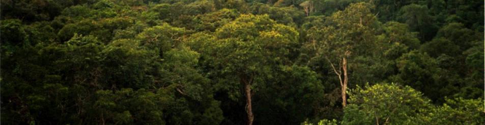 Imagen de la selva Amazonas