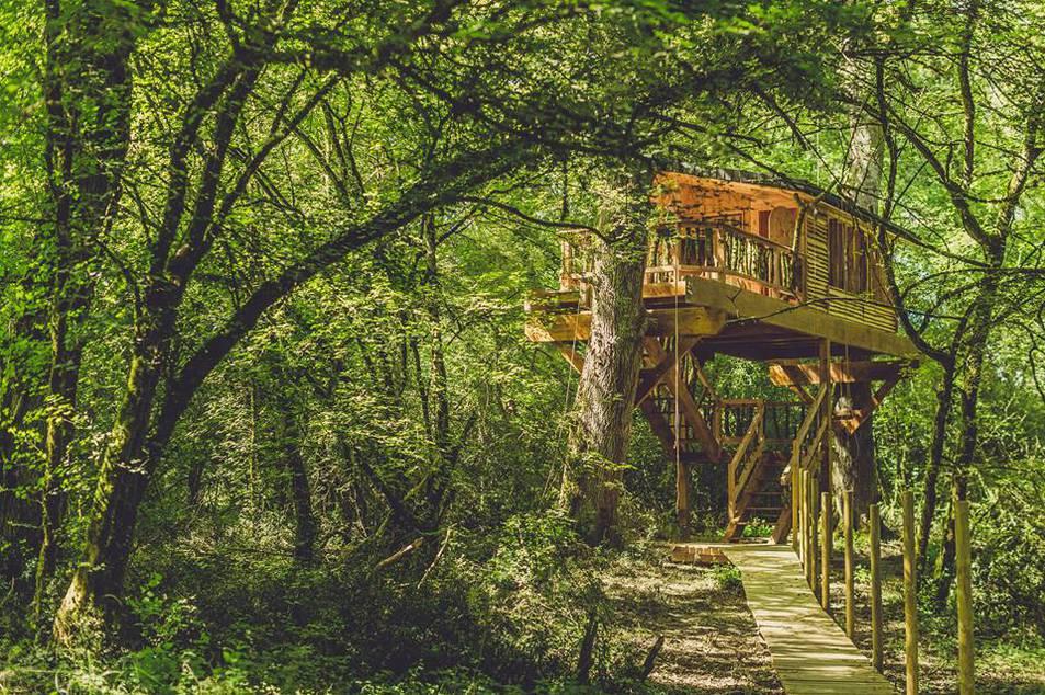 Casas en los árboles.