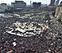 Egipto toma la calle para dirimir su división política