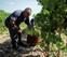 Navarra canaliza ayudas de 1,7 millones para promocionar bodegas