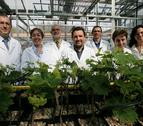 La UN y el CSIC estudian los efectos del cambio climático en las plantas