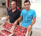 La primera feria del melocotón de Sartaguda vende en un día 4.000 kg