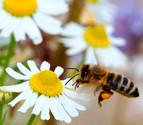 La desaparición de las abejas y su impacto en los ecosistemas