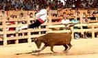 Larraga acoge la Fiesta de la Vaca Brava este fin de semana