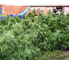 Tres detenidos tras defraudar 375.000 euros de luz para cultivar marihuana