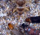 Charla sobre los macroinvertebrados en los ríos de Pamplona