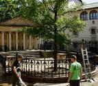 Un retoño del Árbol de Gernika echa raíces en Sartaguda