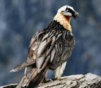 EE UU y Canadá han perdido un cuarto de sus pájaros en los últimos 50 años