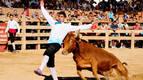 La Fiesta de la Vaca Brava de Larraga se amplía a todo el fin de semana