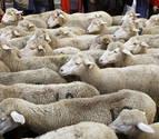 Una televisión de Noruega, muestra durante horas ovejas pariendo