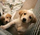 Los veterinarios recuerdan que las mascotas son seres vivos, no juguetes