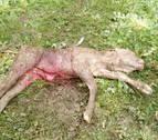 Denuncian nuevos ataques de buitres a ganado vivo en Esteríbar y Eltso