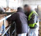 Catorce detenidos por engorde ilegal de ganado en Zaragoza, Huesca y Lleida