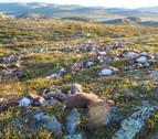 Un rayo fulmina a 300 renos en Noruega