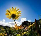 El sol se impondrá al cierzo este jueves en toda Navarra