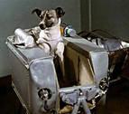 ¿Qué miedo impidió que dos perros viajaran al espacio?