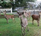 Cuenca dice que ahora no hay dinero para el mini zoo de la Taconera