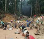 Crece un 29% la deforestación de la selva amazónica en Brasil
