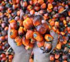 La OCU aconseja no abusar del aceite de palma y vetar el que no sea sostenible
