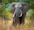 Botsuana investiga la muerte de más de 150 elefantes