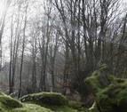 La Asociación Forestal de Navarra presenta en Golem el documental 'Gutik Zura'
