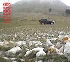 La Policía Foral denuncia a dos cazadores en el coto de Ollo