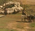 Destinados 1,4 millones al pastoreo sostenible de la Red Natura 2000
