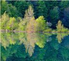 La Ciudadela acoge una exposición de Koldo Badillo con 46 fotografías de bosques