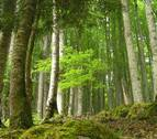 LIBERA mejora el estado de conservación de la zona Roncesvalles-Selva de Irati