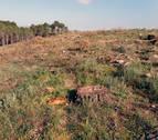 El Gobierno dice que la tala de pinos en Tudela busca la gestión sostenible