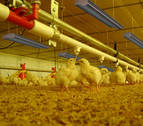Avir, climatización y eficiencia para explotaciones avícolas