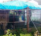 Intervenidas en Villava varias aves silvestres catalogadas