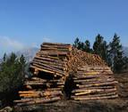 Más de 5.000 personas viven de los recursos del bosque en Navarra