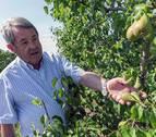 El granizo causa graves daños en los cultivos de la Ribera