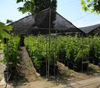 EVENA celebra una jornada sobre vinos procedentes de viñas viejas de Navarra