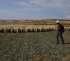 Ocho días a pie de la Ribera al valle de Roncal en el camino inverso de la trashumancia