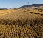 Pérdidas millonarias en el campo navarro