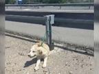 Rescatan a un cachorro abandonado y atado al guardarraíl de una carretera