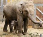 Quince elefantes y un destino