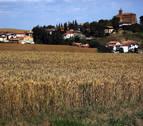 La cosecha de cereal de invierno en Navarra ha sido buena pese a los malos augurios