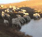 La sequía obliga a Bardenas a suministrar agua a más de 60 distritos ganaderos