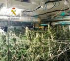Desmantelan en Ibiza un laboratorio de marihuana con hilo musical incorporado
