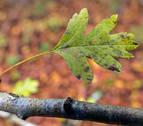 Otoño cálido y seco en octubre y con más lluvias en noviembre y diciembre