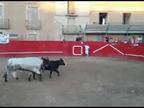 Al ritmo de 'Despacito': una vaquilla salta al callejón de la plaza en Milagro