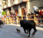Un perro, en el encierro de Peralta