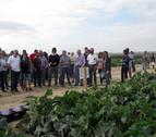 Cadreita acoge una presentación de ensayos de cultivos hortícolas