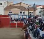 Dos vaquillas protagonizan un gran susto en un espectáculo en Santacara