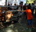 Elizondo, pasto de las vacas pirenaicas