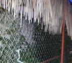 Detenido un vecino de Caparroso por cultivar plantas de marihuana