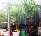 Ingresa en prisión por traficar con 'speed' y marihuana en Castejón